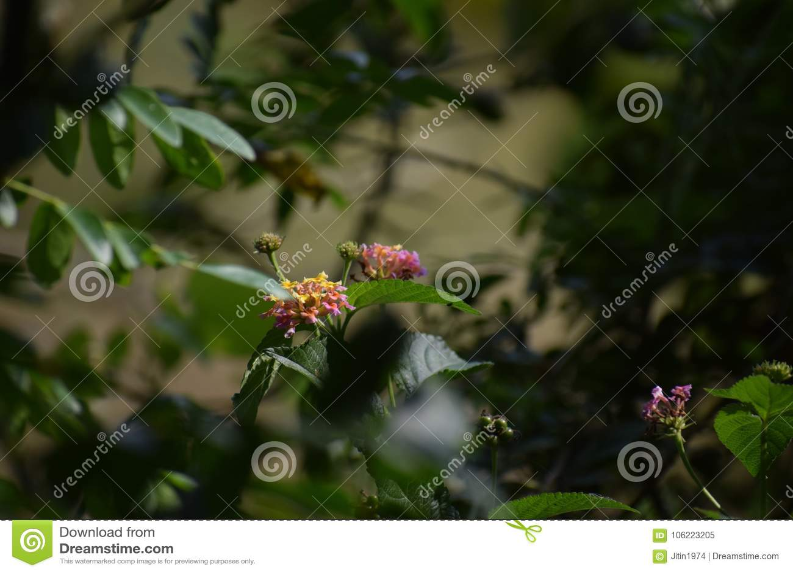 Beautifulwildflowernaturecoloursjoy stock image image of download beautifulwildflowernaturecoloursjoy stock image image izmirmasajfo