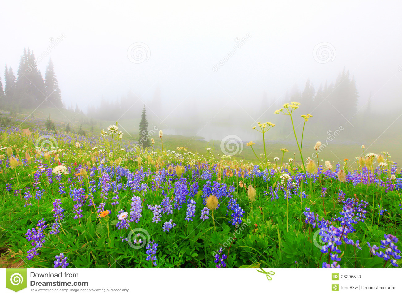 Beautiful Wild Flowers Field With Lake Stock Photo Image Of