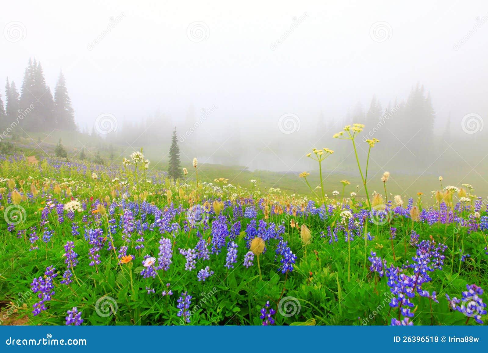 Beautiful wild flowers field with lake stock photo image of download beautiful wild flowers field with lake stock photo image of rainier blue izmirmasajfo
