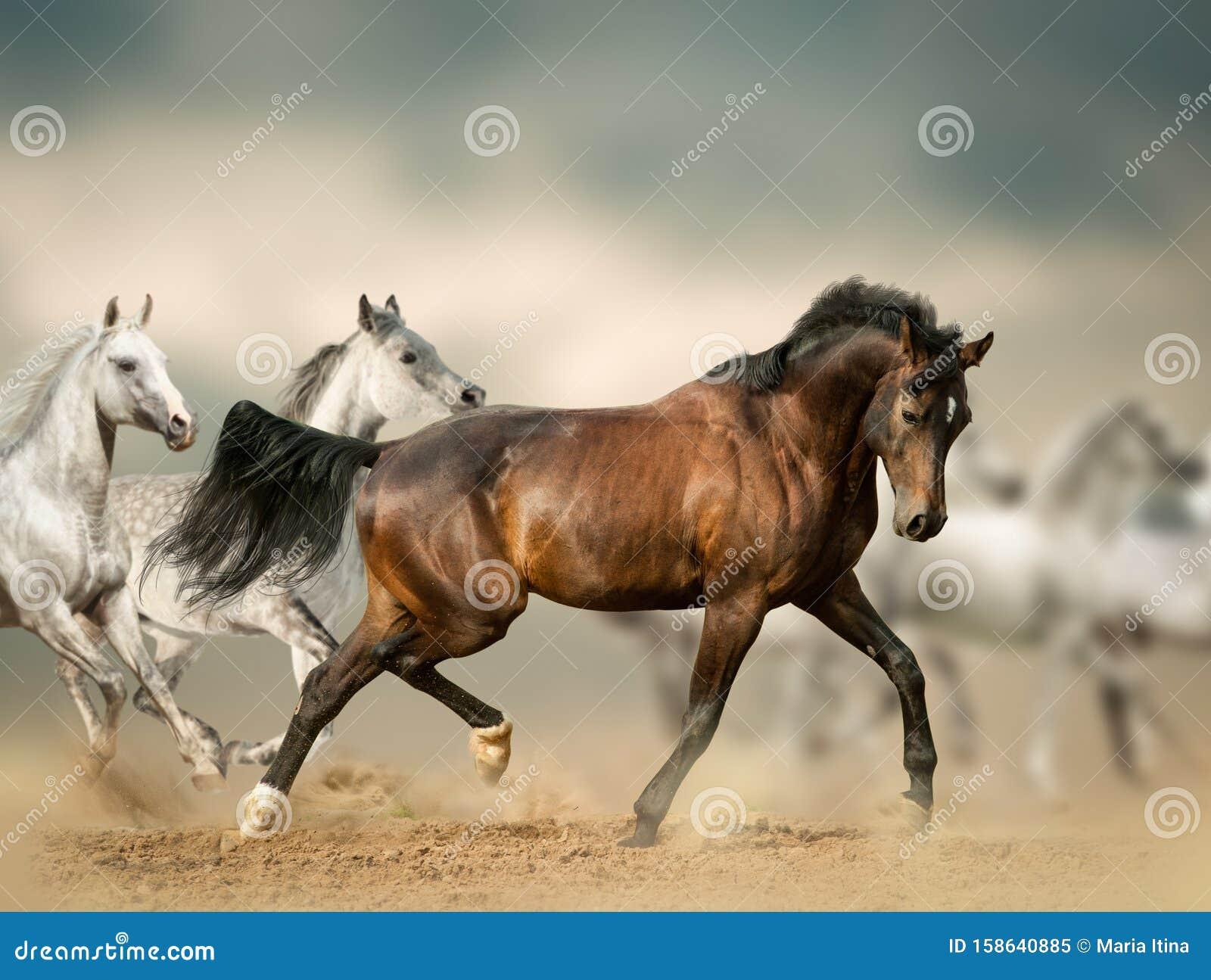 Beautiful Wild Horses In Desert Stock Image Image Of Motion Activity 158640885