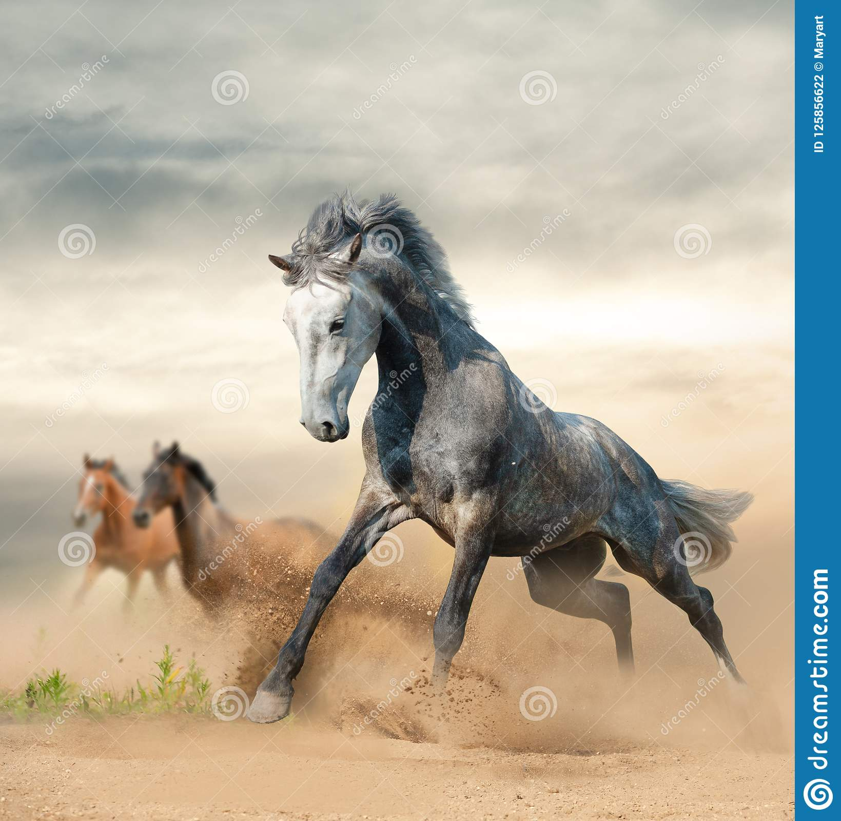 Beautiful Wild Horses On Freedom Stock Photo Image Of Equestrian Moving 125856622