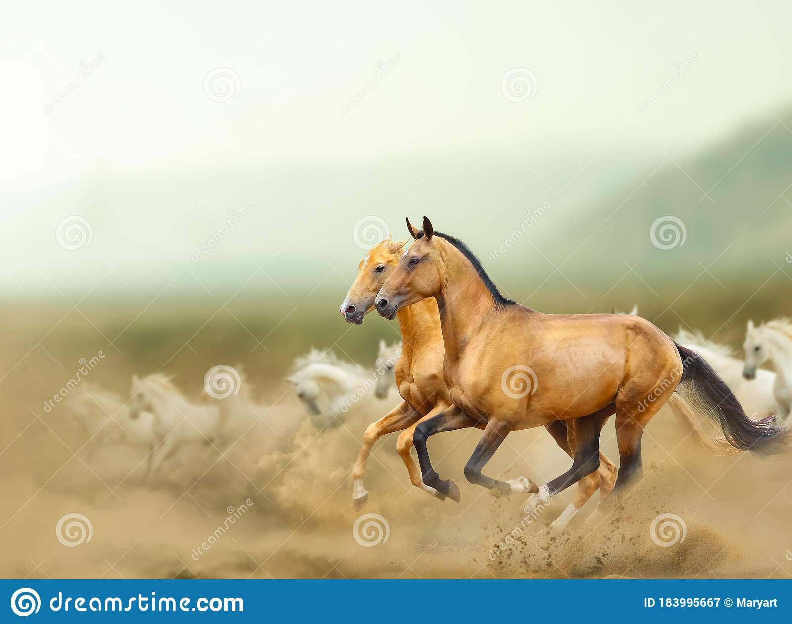 Beautiful Wild Horses In Prairies Stock Image Image Of Nature Horse 183995667