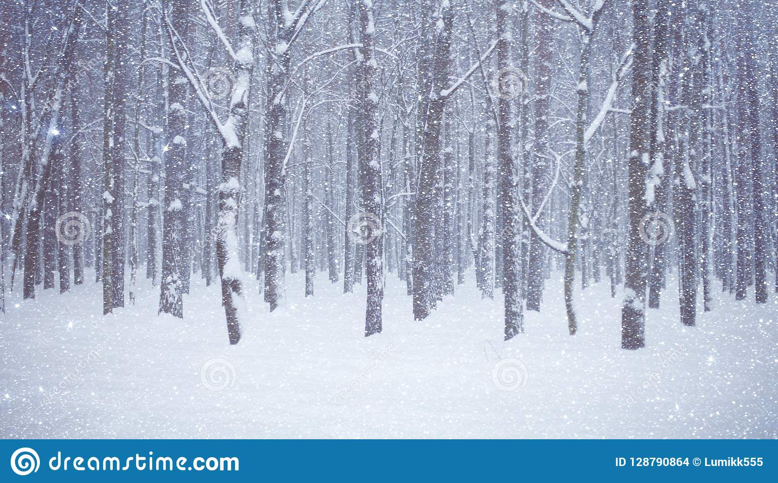 Beautiful Winter Forest With Trees Covered Snow Stock Photo - Image