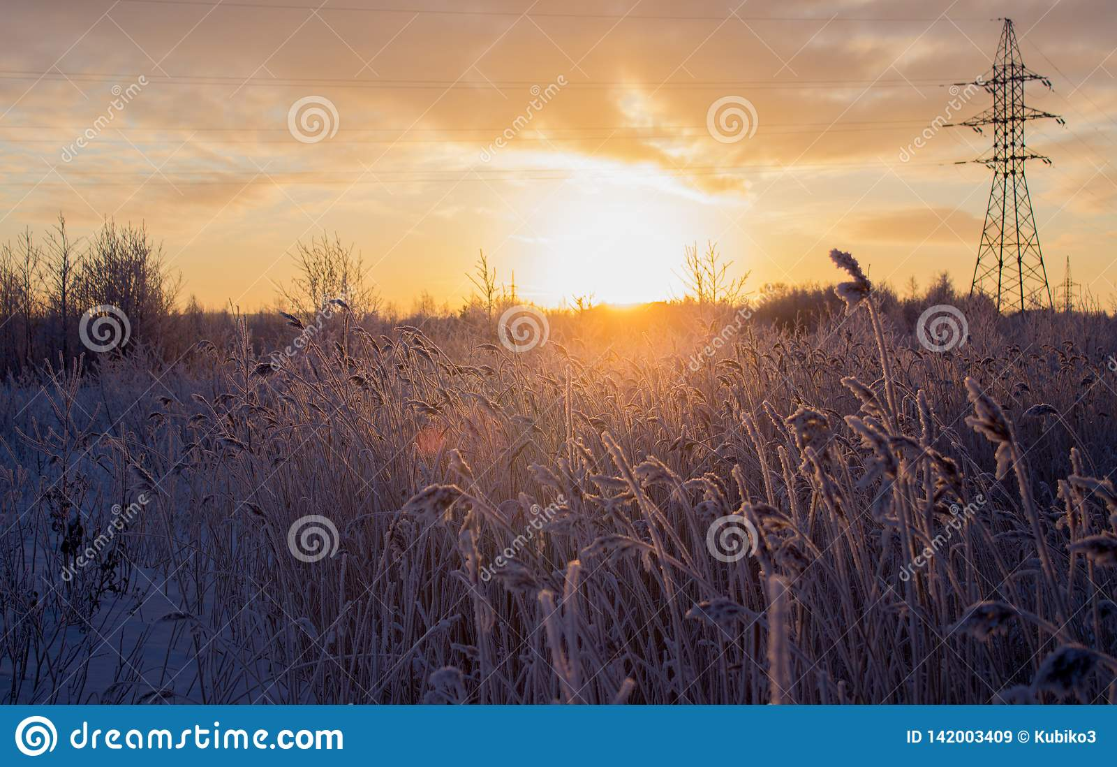Beautiful winter landscape, in a field with snow-covered tall grass.
