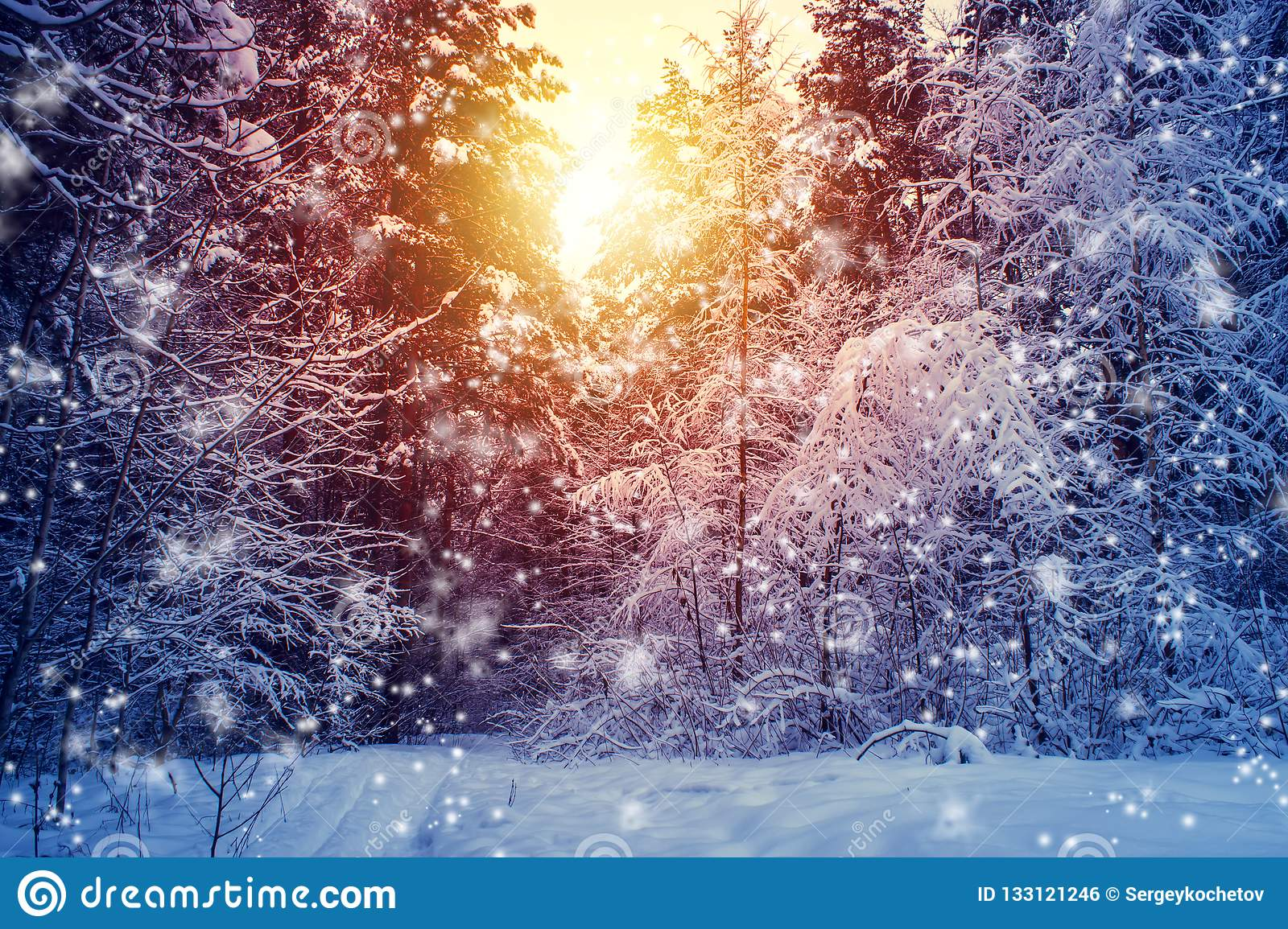 Beautiful winter landscape with forest, trees and sunrise. winterly morning of a new day. Christmas landscape with snow.