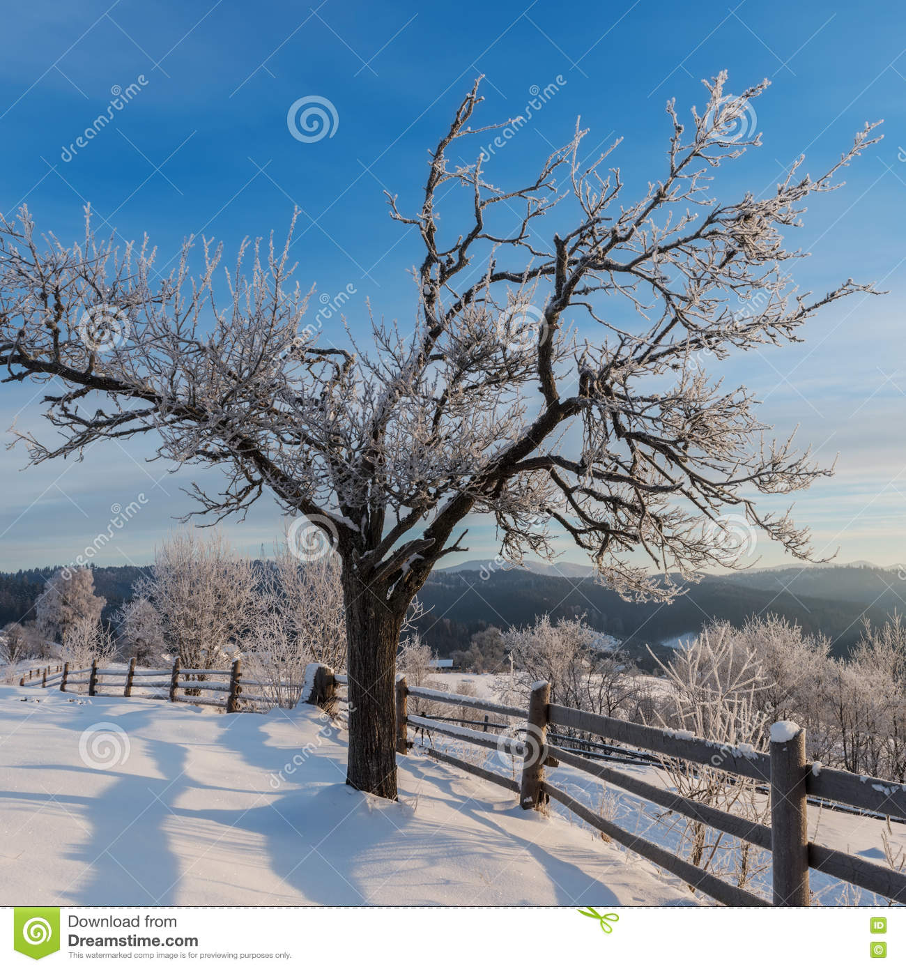 Beautiful winter landscape with frosted tree
