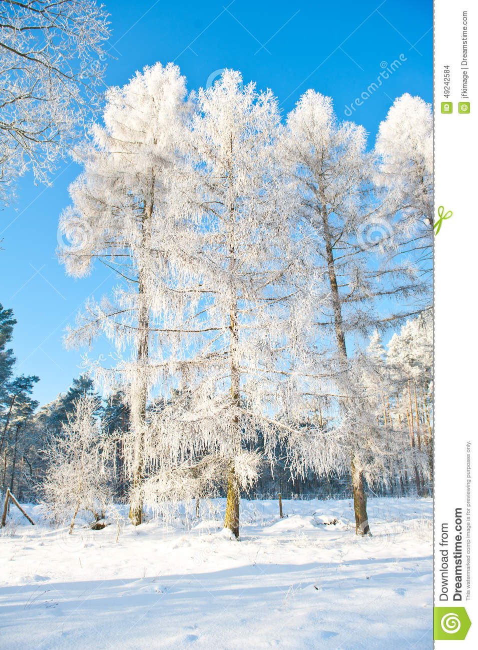 beautiful winter landscape with snow covered trees sunny