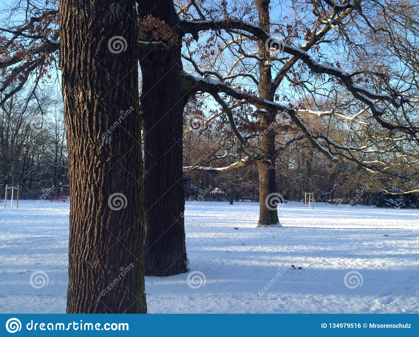 Beautiful Winter Scenery In Berlin Park Hasenheide With Snow Covered