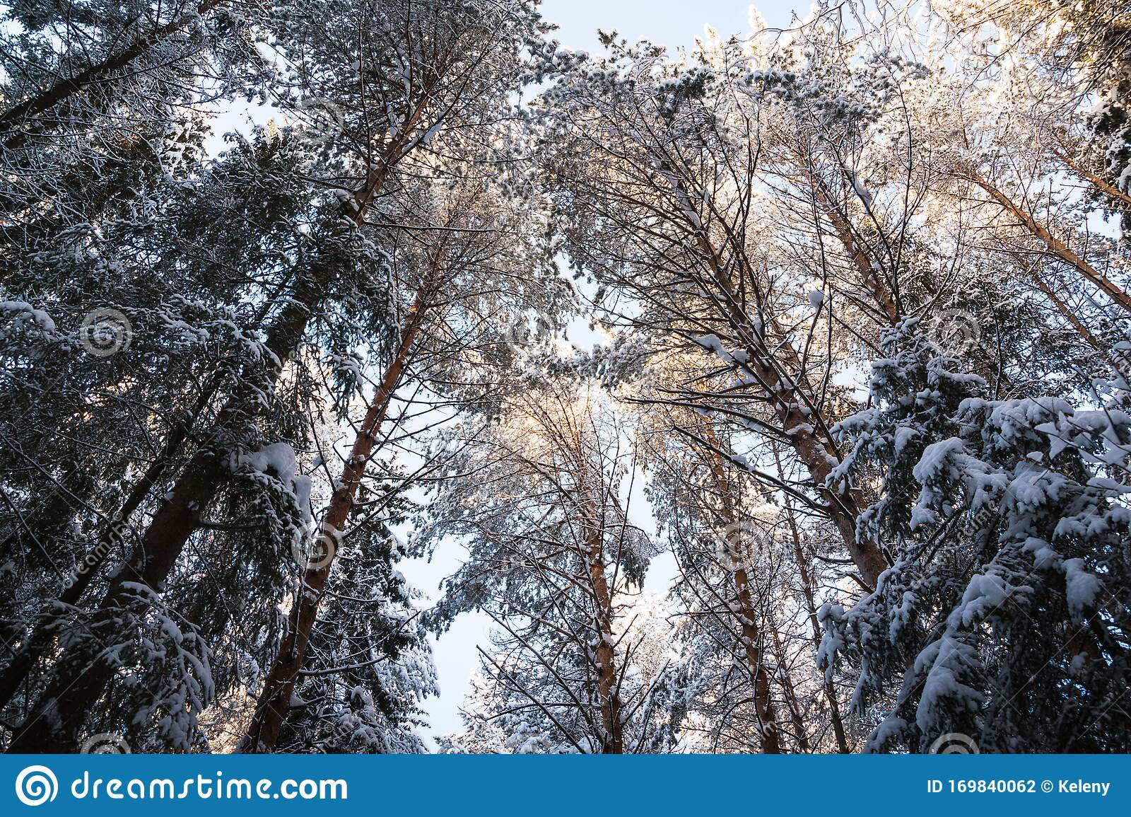 Beautiful Winter Scenery With Forest Full Of Trees Covered ...