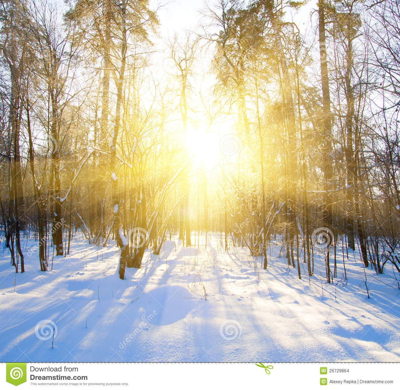 Beautiful Winter Sunset With Trees In Snow Stock Photo