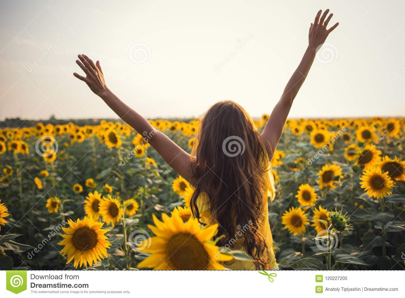 Beautiful woman with long hair hands up in a field of sunflowers