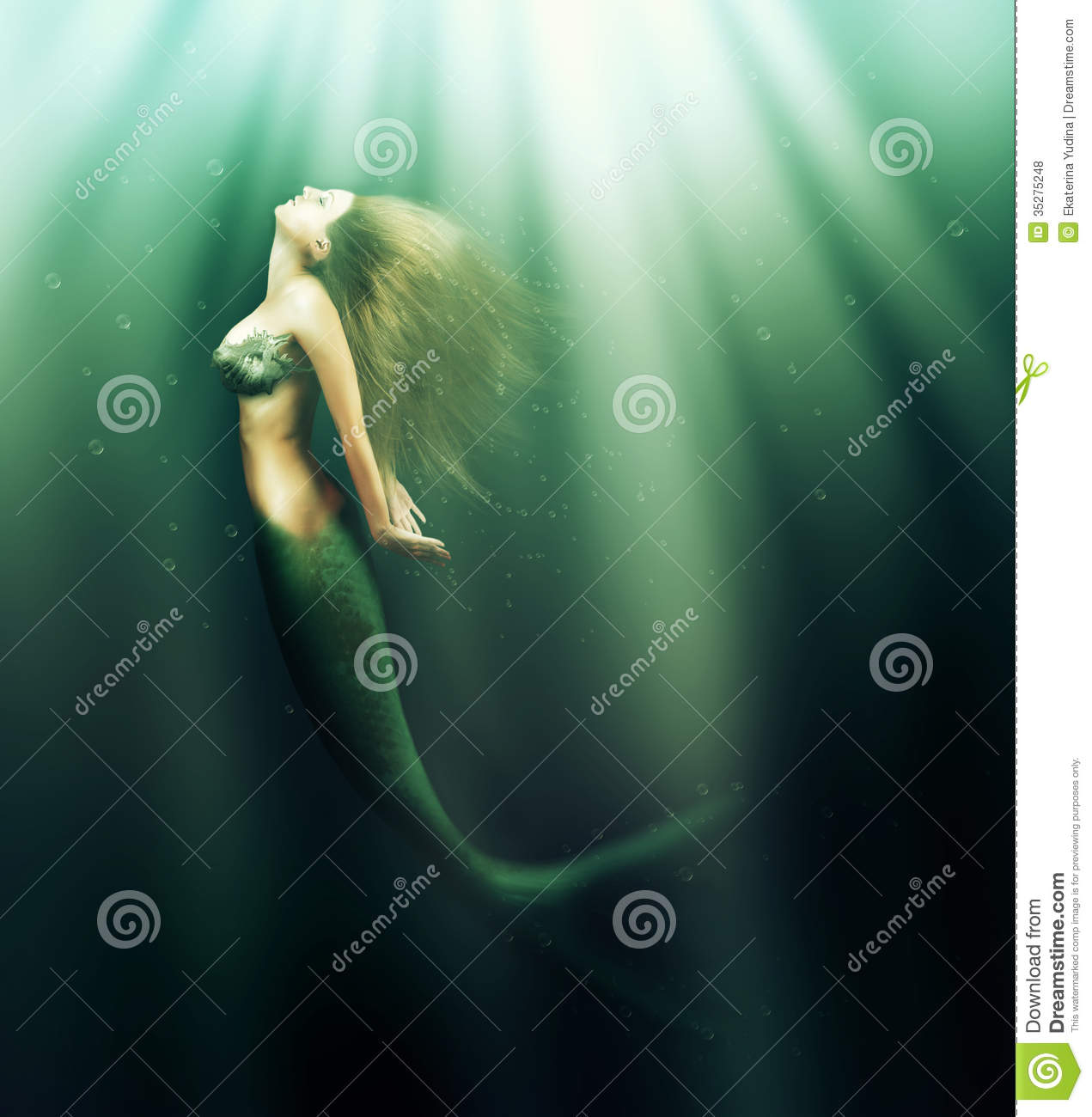 mermaid stock photos images u0026 pictures 11 321 images