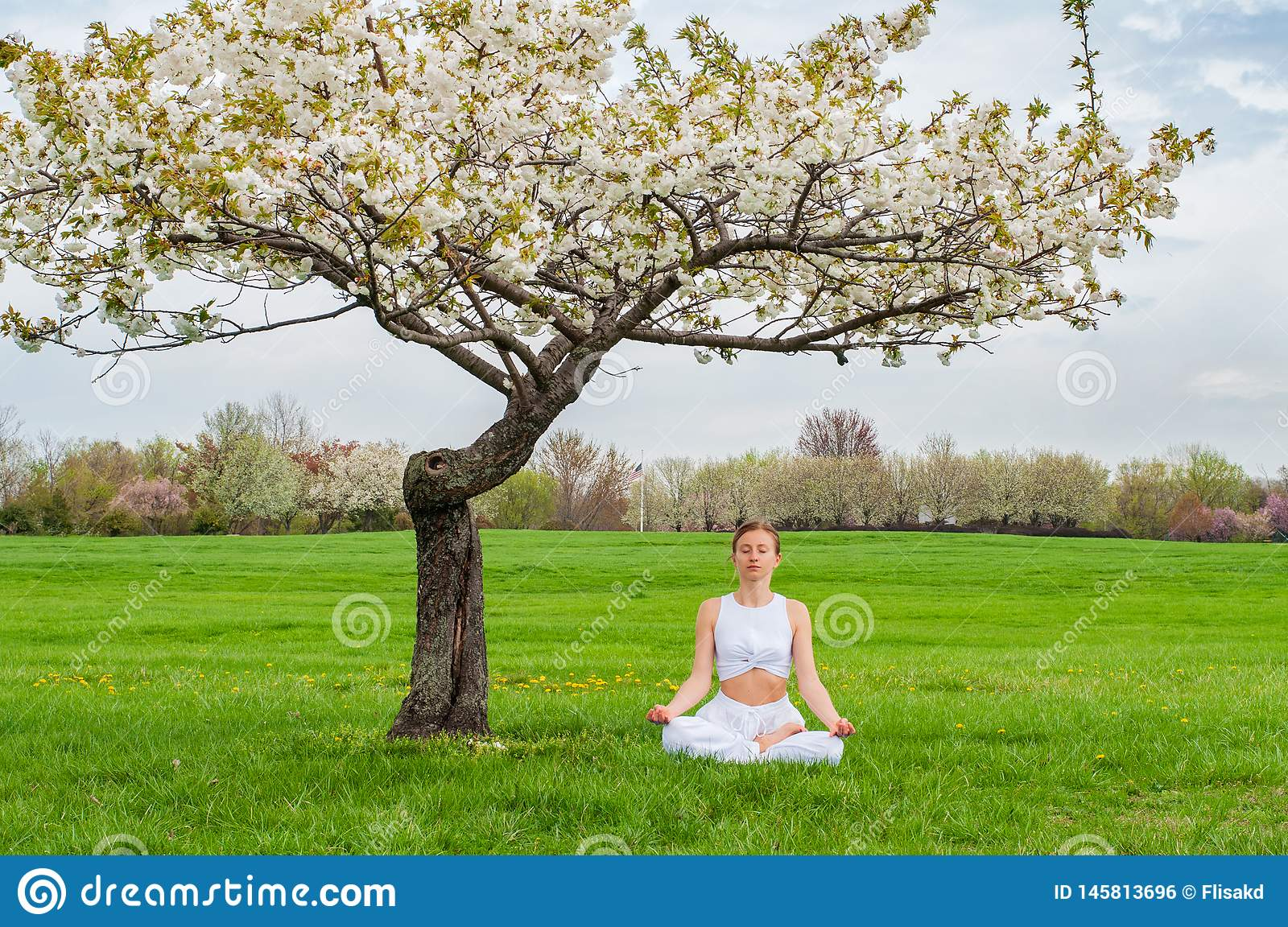 Beautiful woman is practicing yoga sitting in Lotus pose near blossom tree