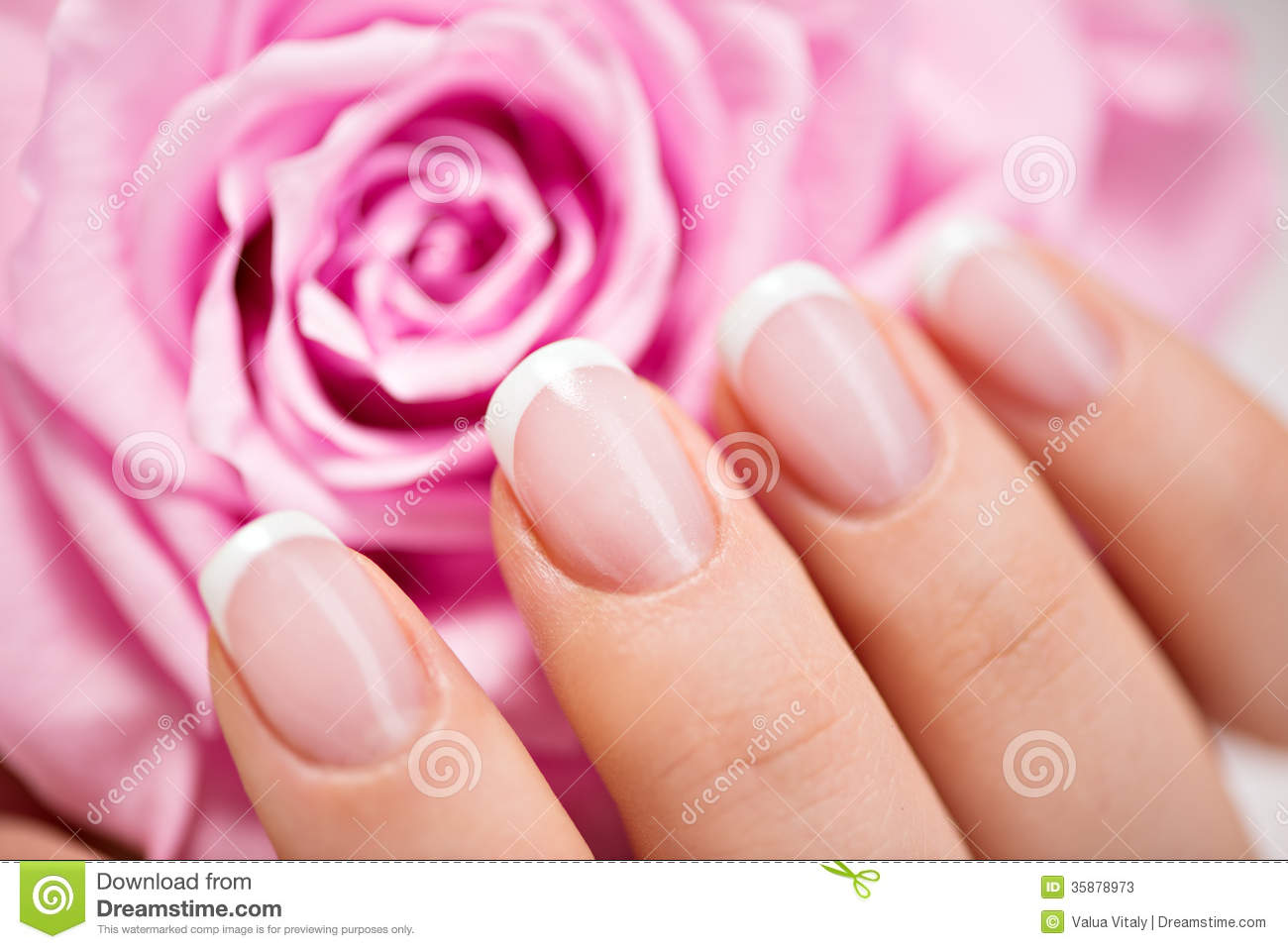 Beautiful Woman\'s Nails With French Manicure And Rose Stock Image ...