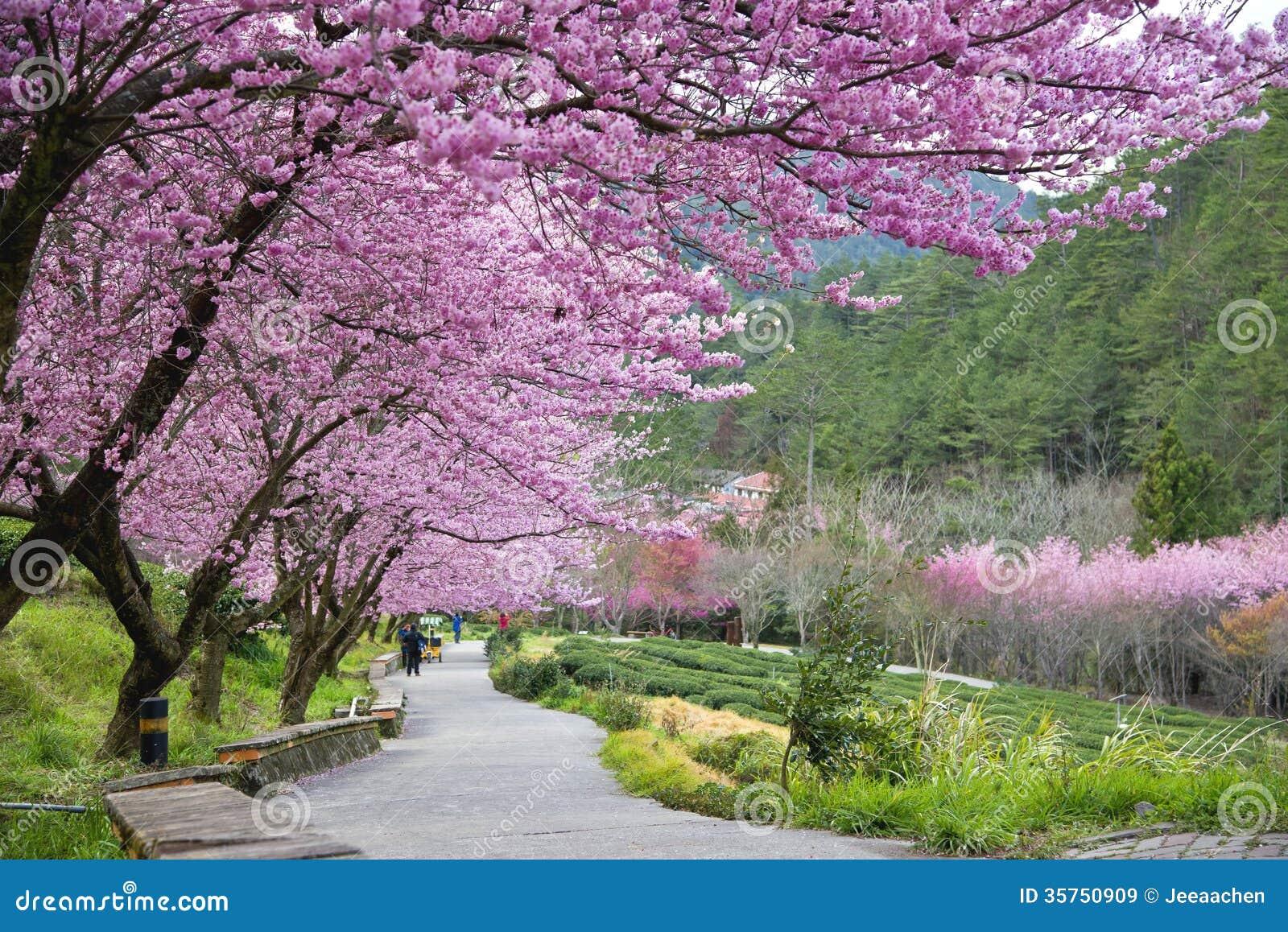 Beautiful Wuling Farm Taiwan Royalty Free Stock Images