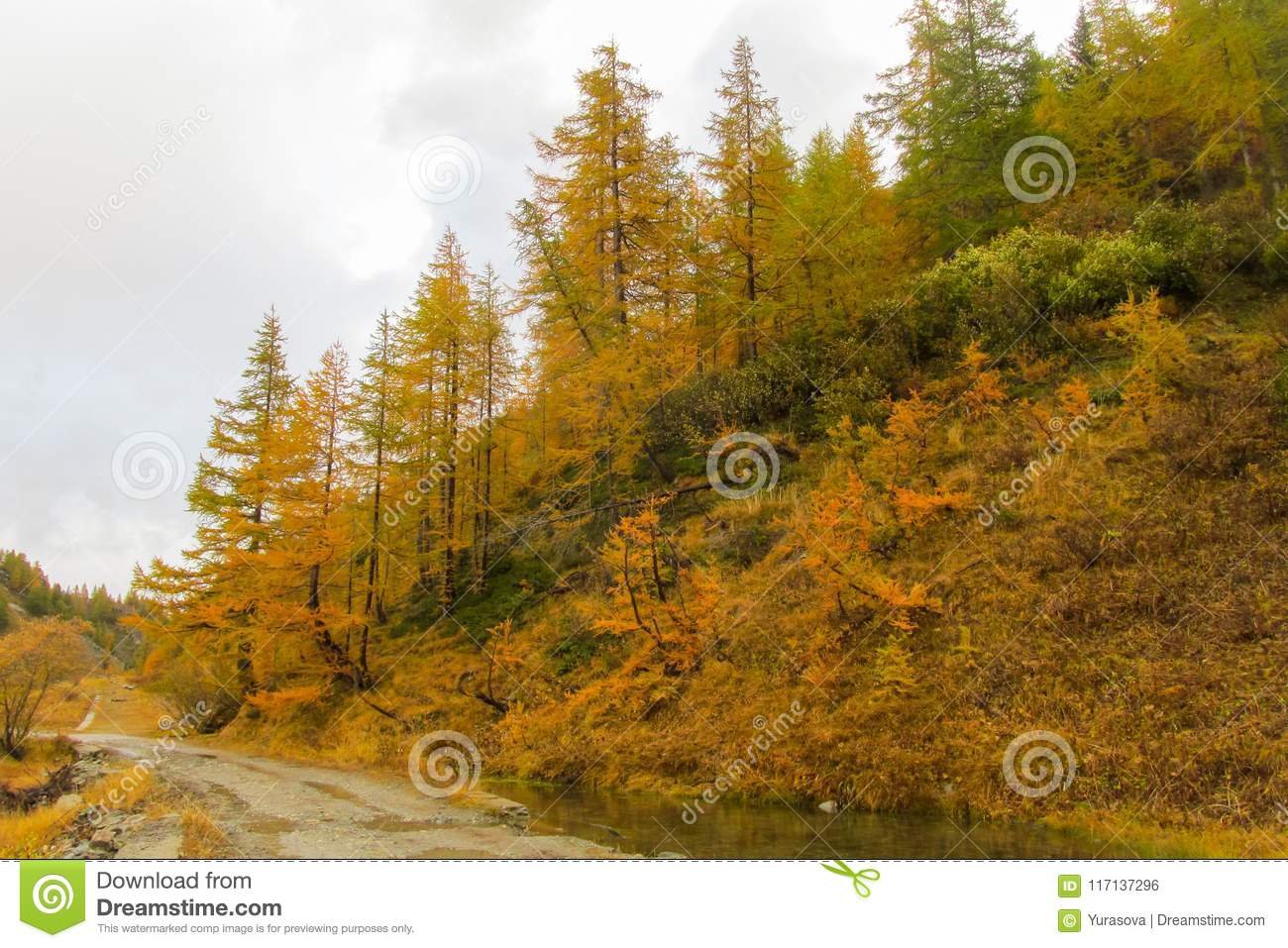 Beautiful yellow colors of autumn in the mountain valley