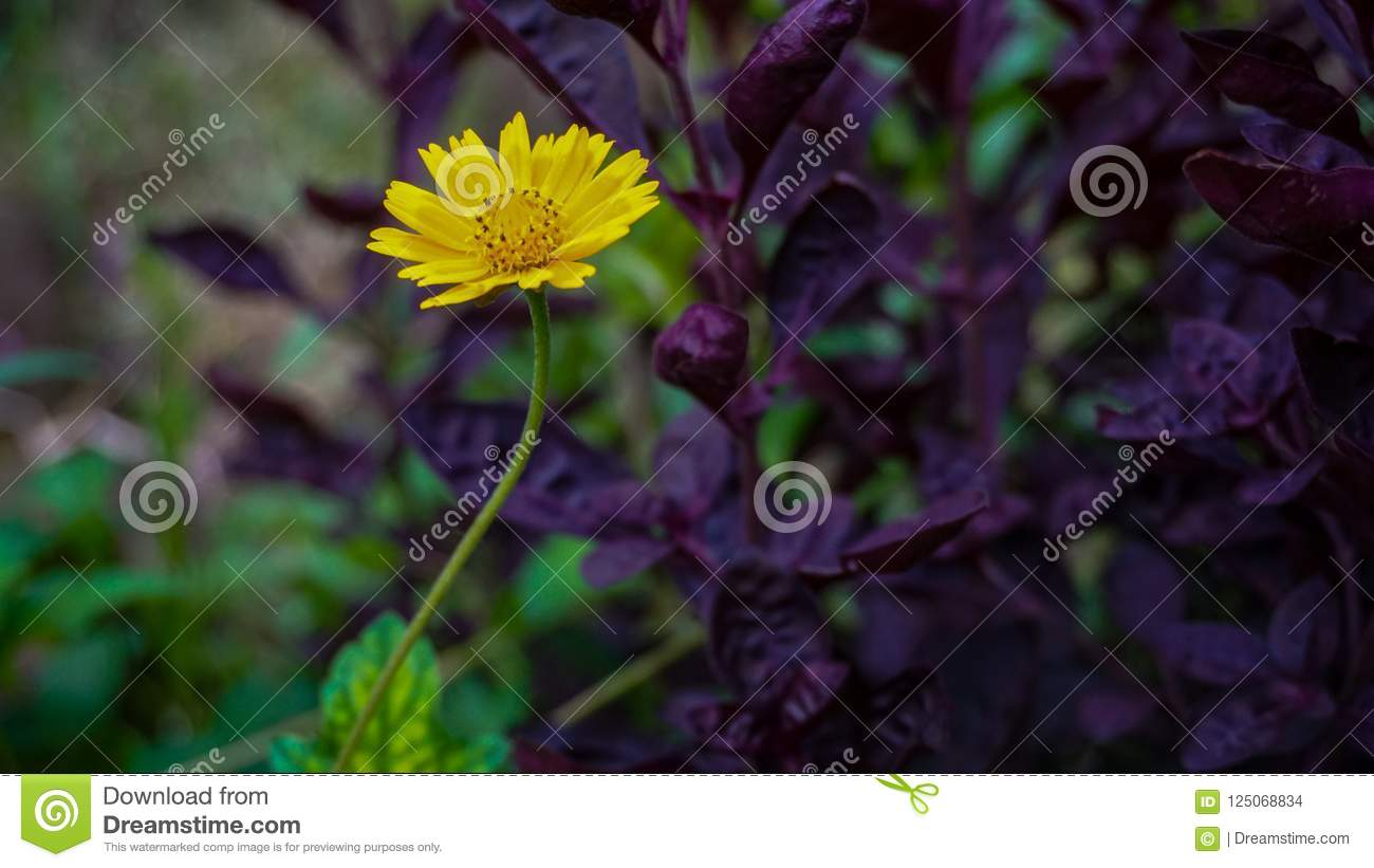 Yellow Colour Flower With Lovely Background Stock Photo Image Of