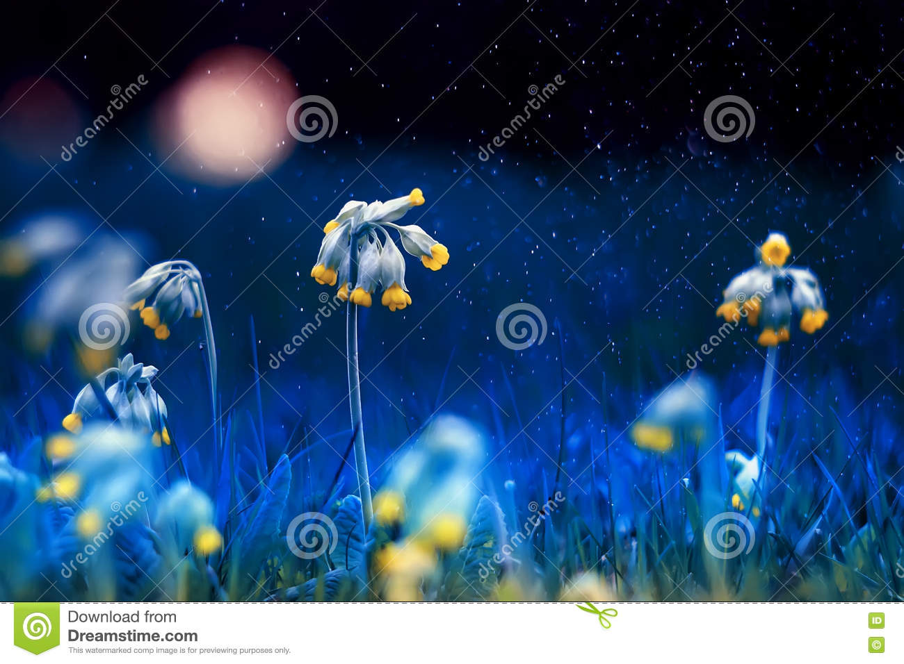Beautiful yellow early spring flowers on the night stock photo download beautiful yellow early spring flowers on the night stock photo image of botany izmirmasajfo