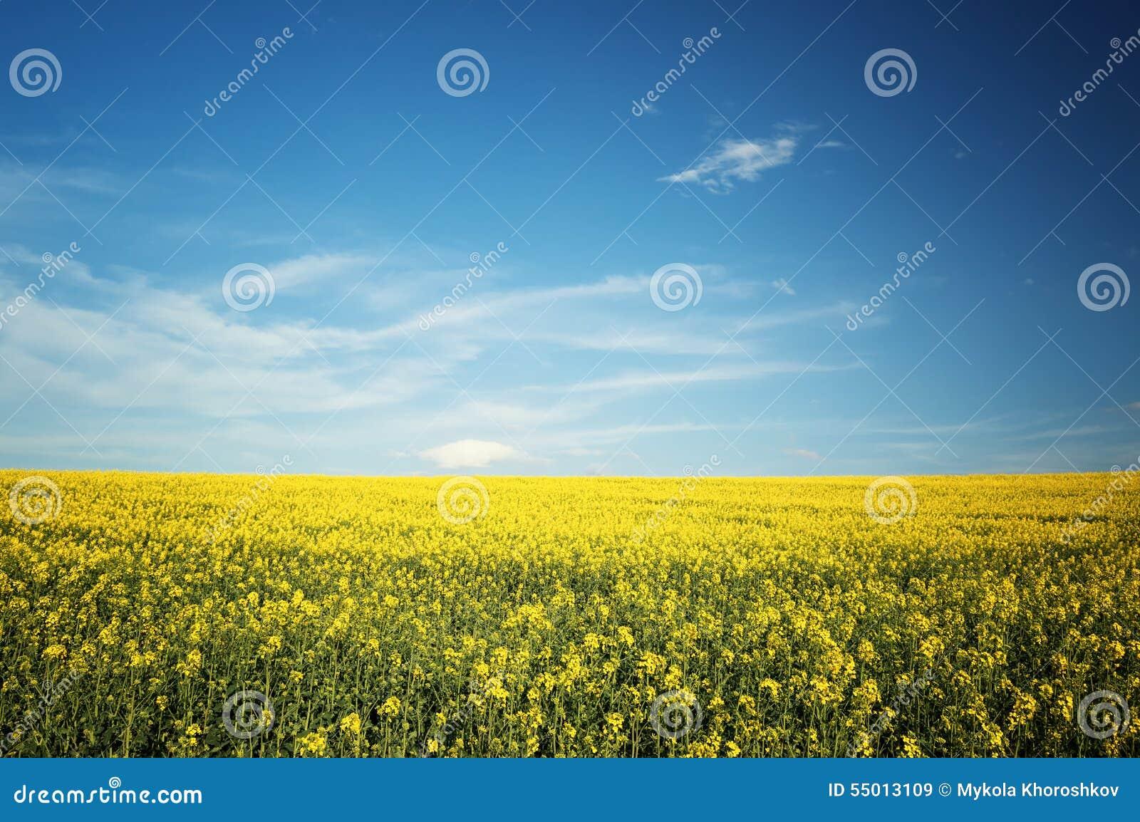 beautiful yellow field landscape -#main