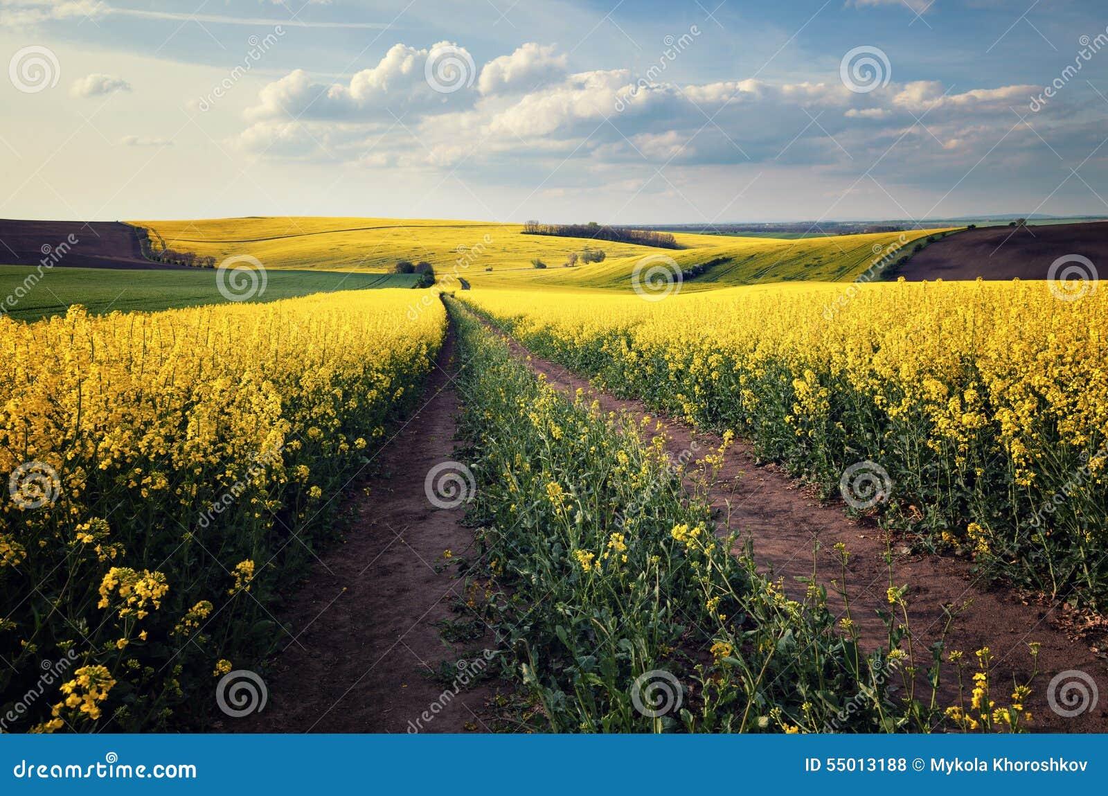 beautiful yellow field landscape - photo #1