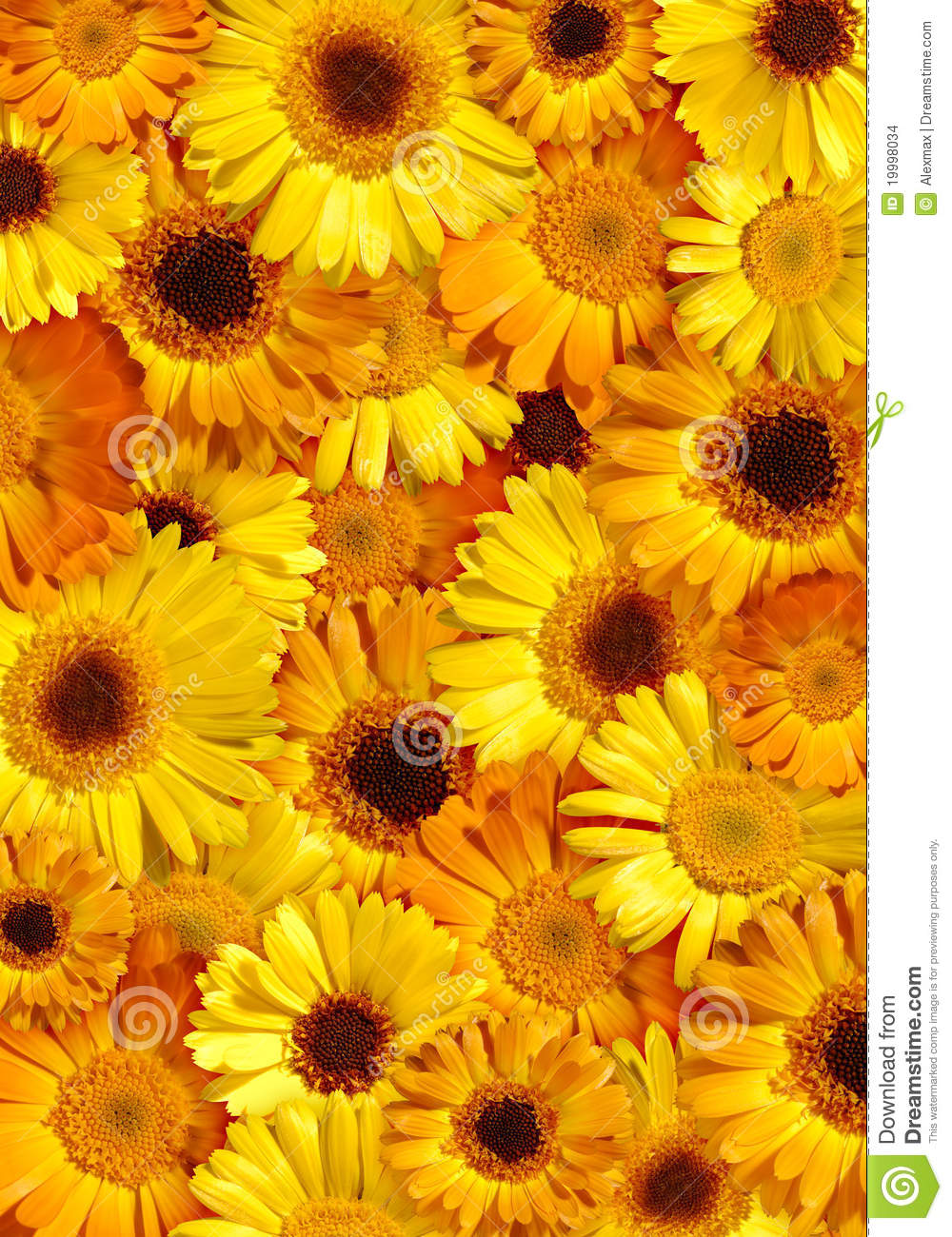 beautiful yellow floral background stock photo - image of pattern