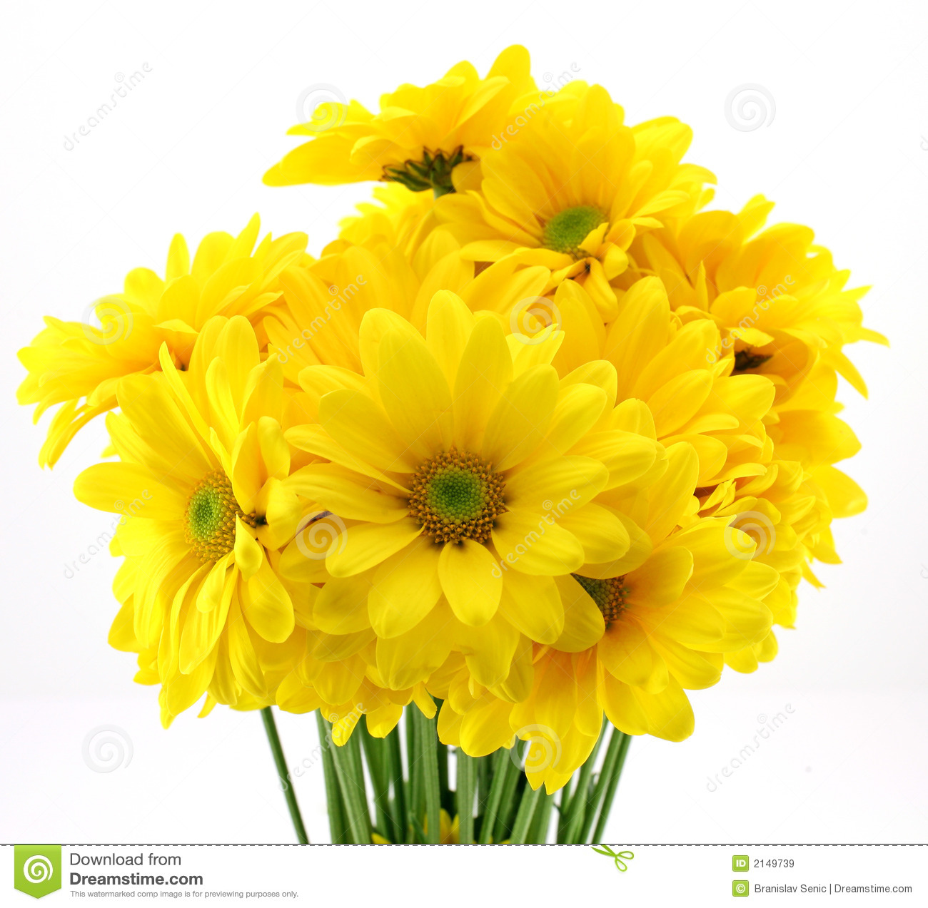 Beautiful yellow flowers stock image image of nursery 2149739 beautiful yellow flowers mightylinksfo