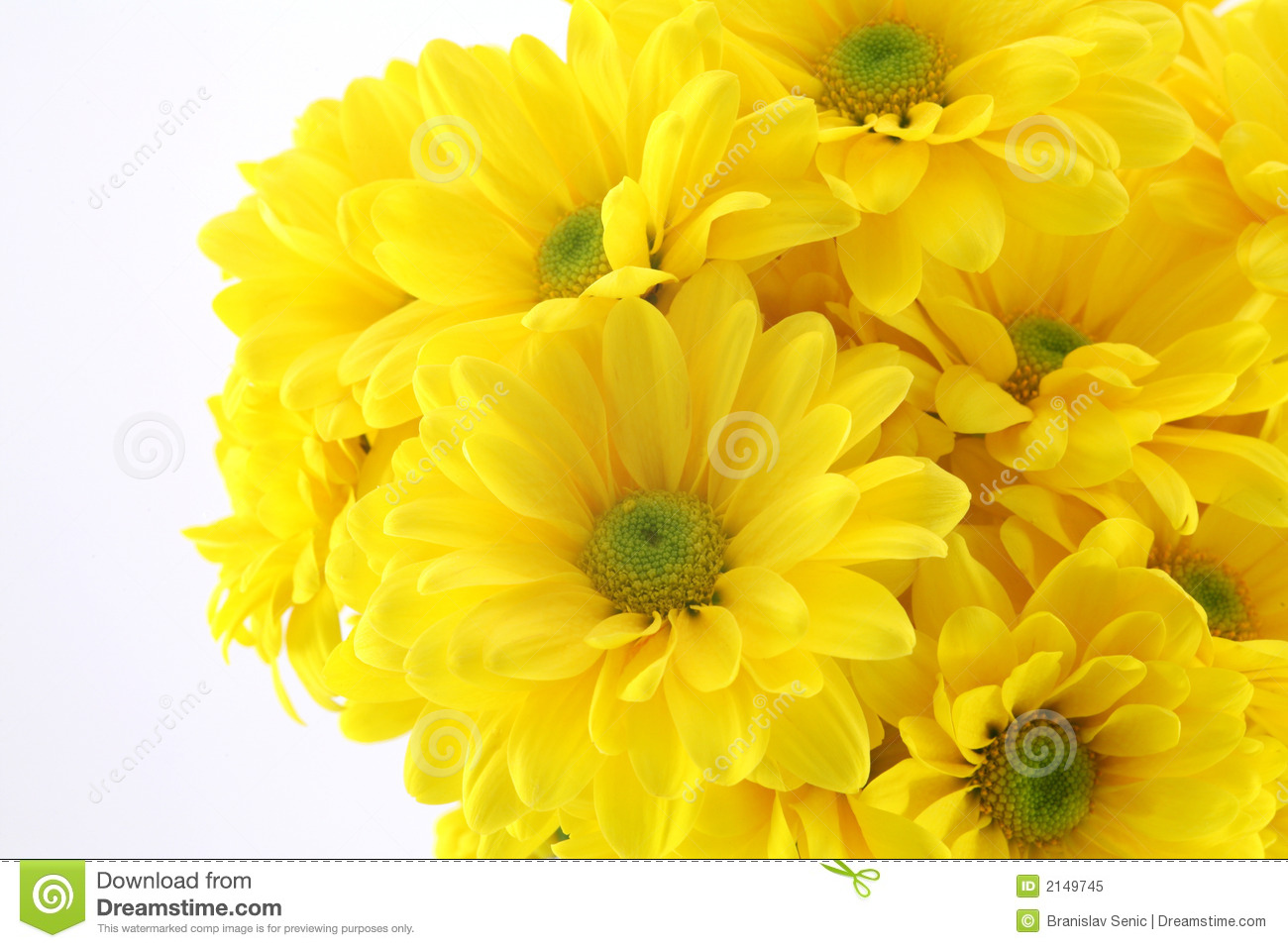 Beautiful yellow flowers stock image image of nursery 2149745 beautiful yellow flowers izmirmasajfo