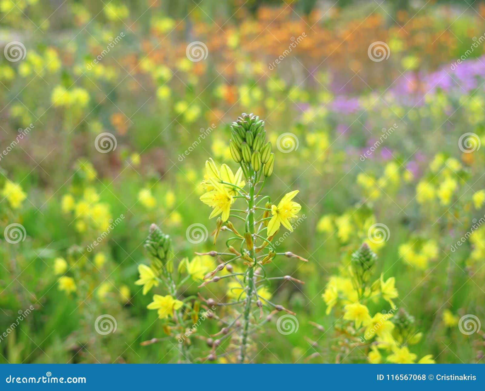Exotic Yellow Flowers Stock Photo Image Of Gardening 116567068