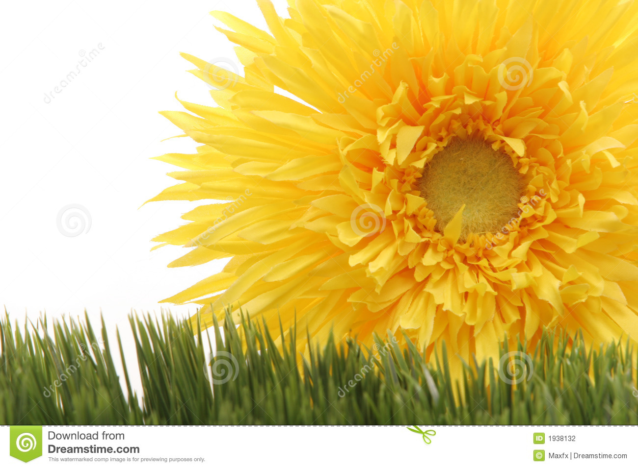Beautiful Yellow Gerbera Daisy Flower On Green Grass Isolated On