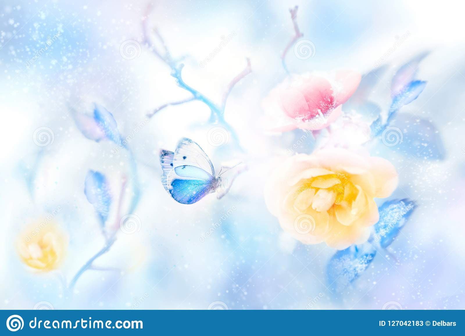 Beautiful yellow and pink roses and blue butterfly in the snow and frost. Artistic colorful winter natural image.