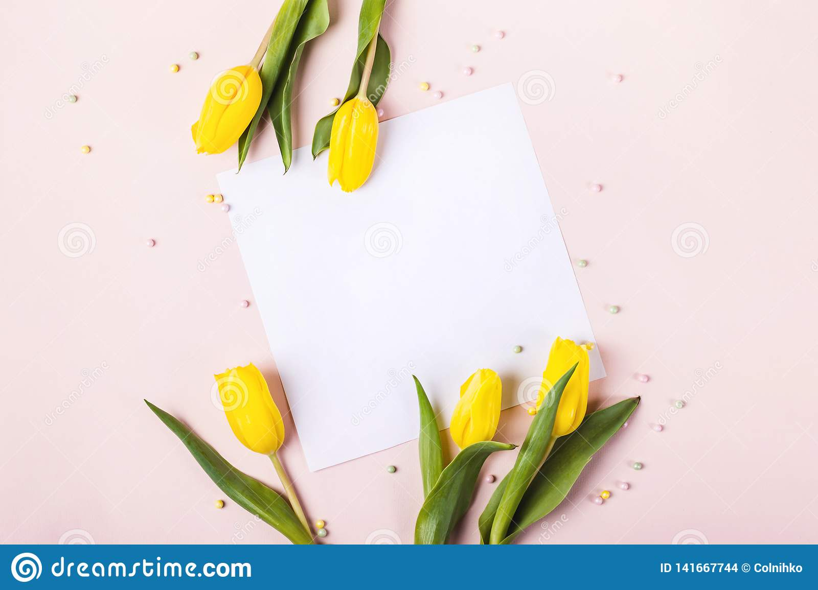 Beautiful yellow tulip flowers on pastel pink background for greeting message. Holiday mock up