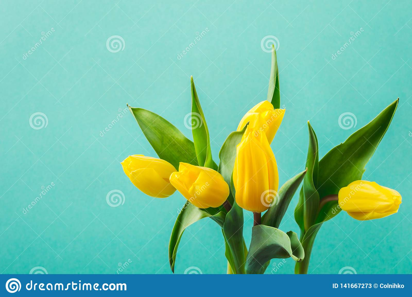 Beautiful yellow tulip flowers on turquoise background for greeting message. Holiday mock up