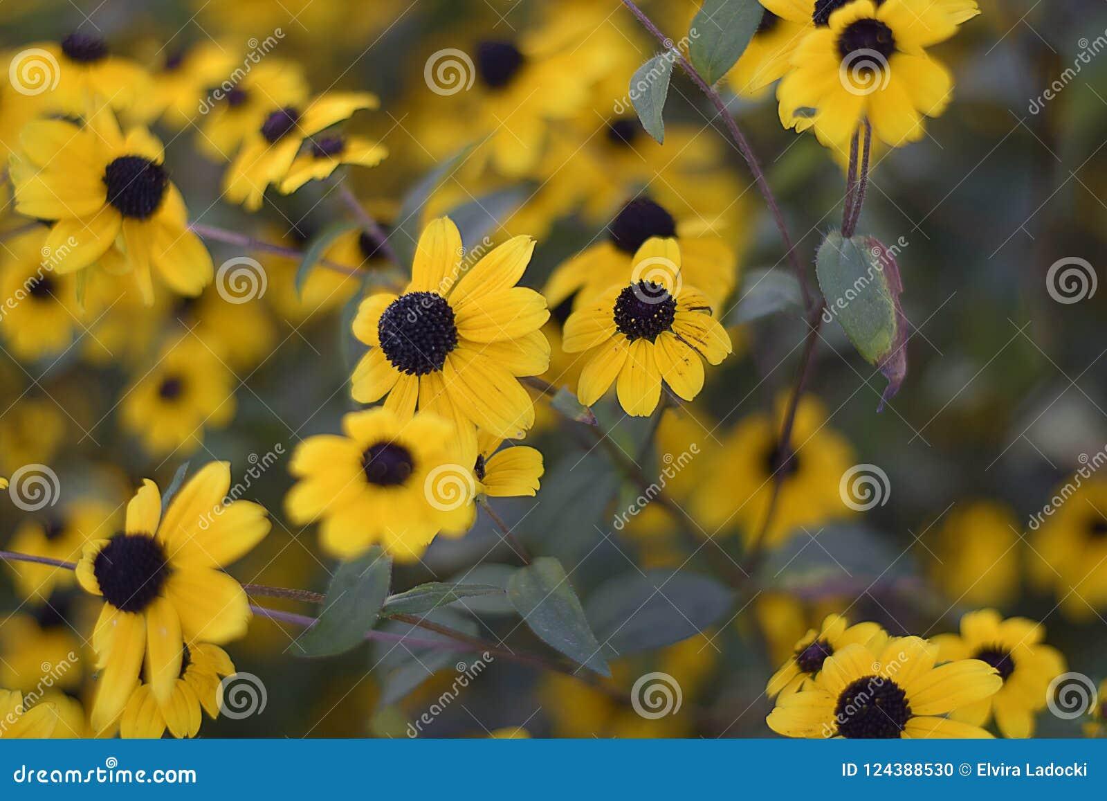 Beautiful yellowl summer flowers close up in my garden stock photo very pretty yellow summer flowers close up in the sunshine in my garden mightylinksfo