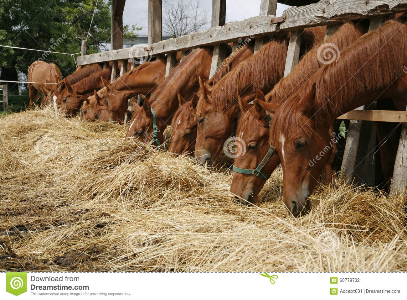 Image Result For Beautiful Ranch Farm