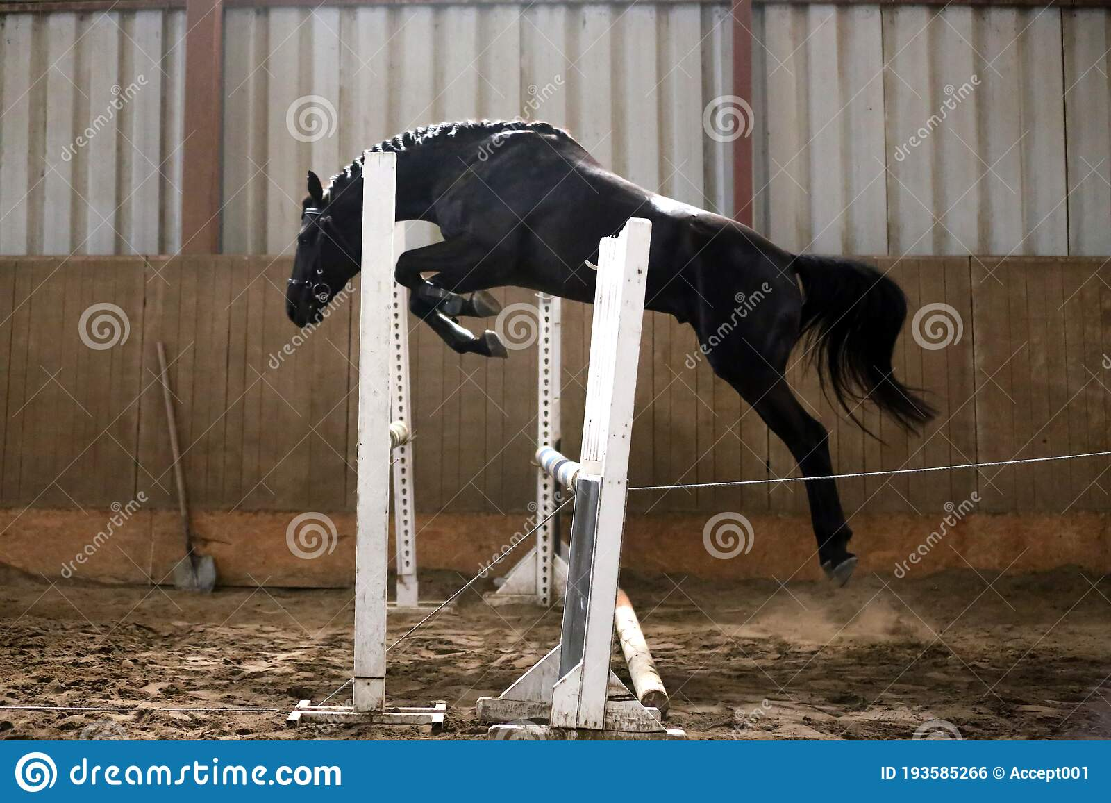 Beautiful Young Purebred Horse Jump Over Barrier Free Jumping In The Riding Hall Stock Photo Image Of Equestrian Brown 193585266
