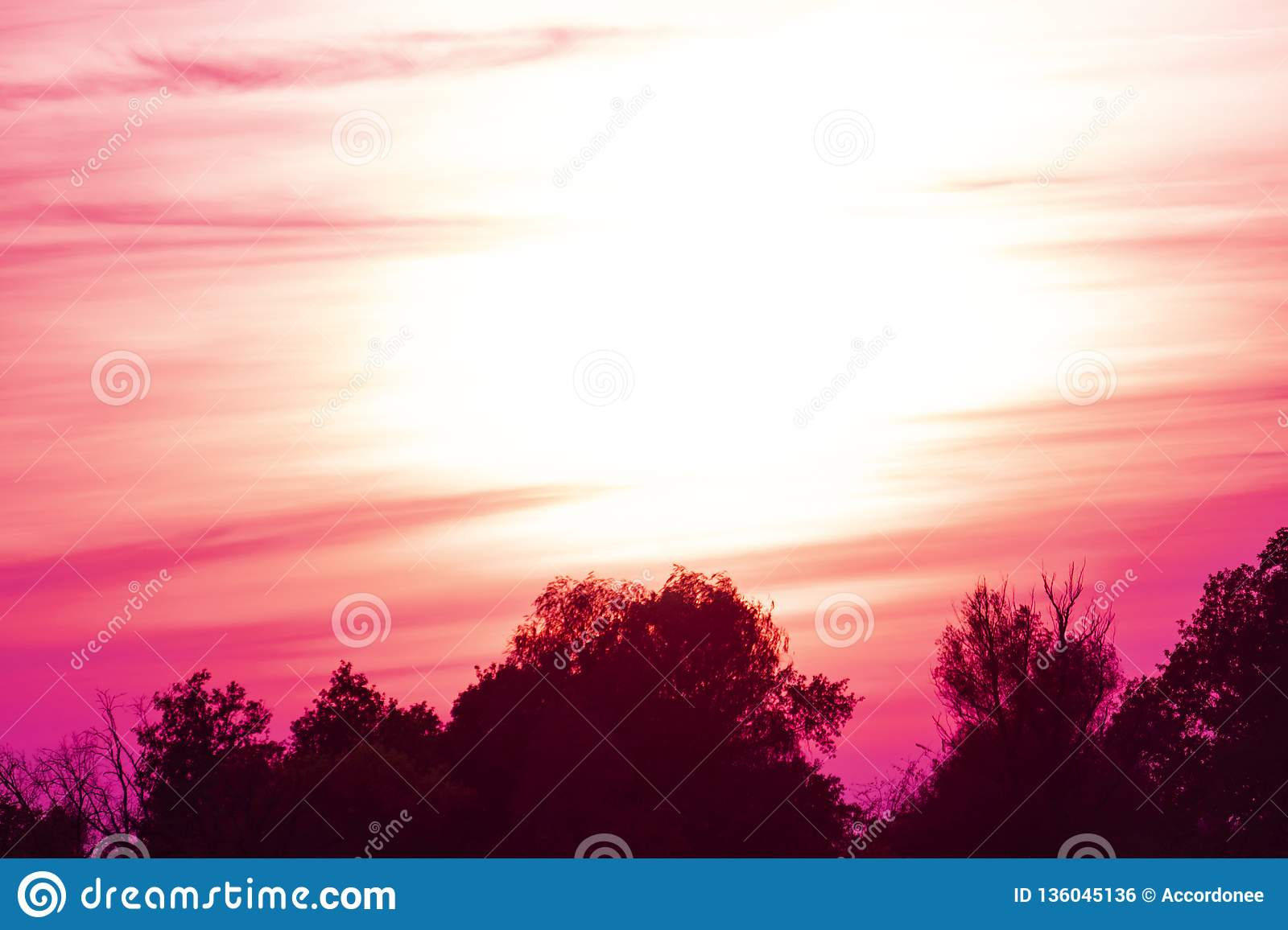Beautifull Purple Sunset And Clouds Above Green Wide Forest In Summer Season B Stock Photo Image Of Forest Panorama 136045136