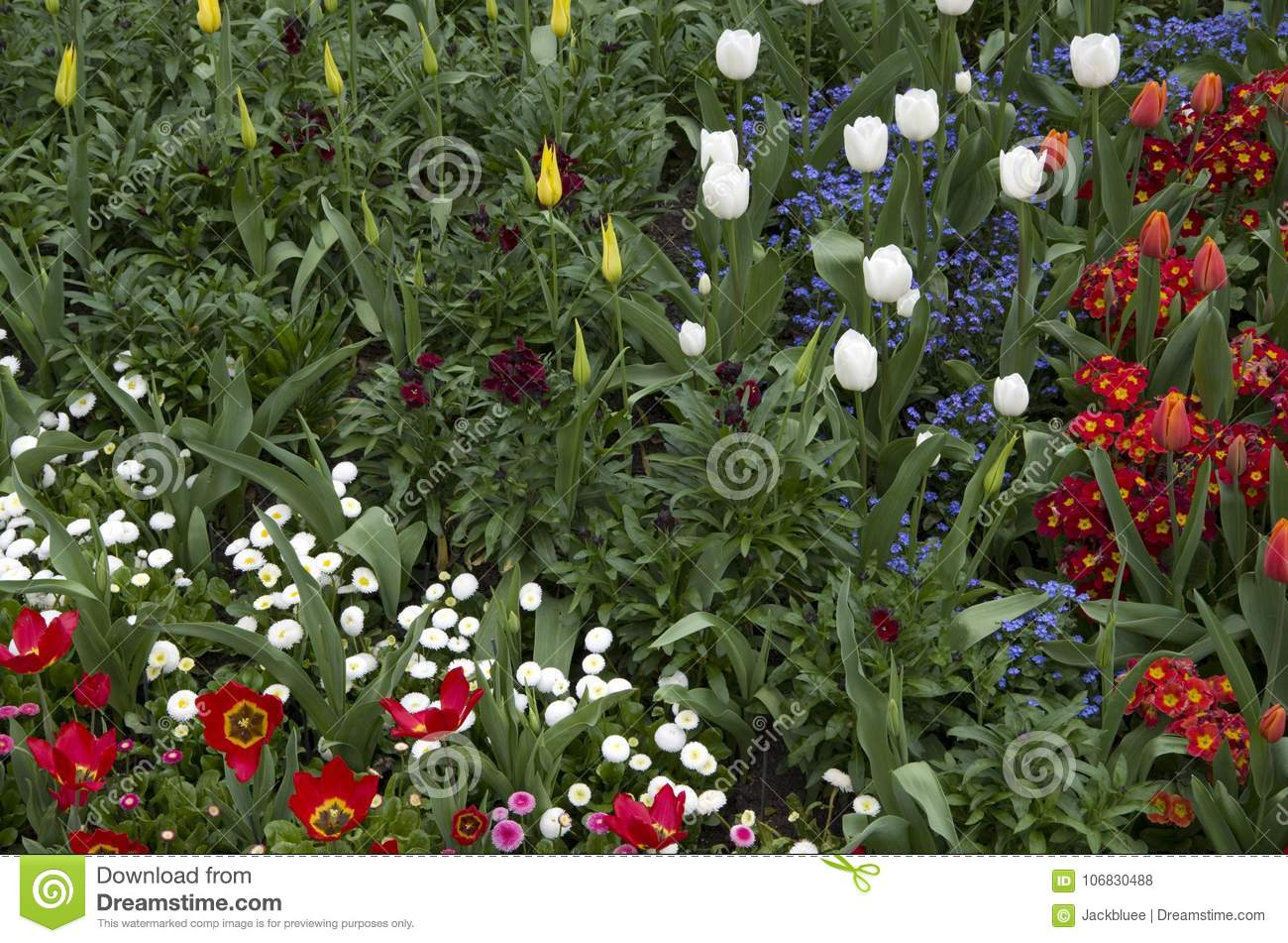 St James Park London Spring Flowers Stock Photo Image Of Growing