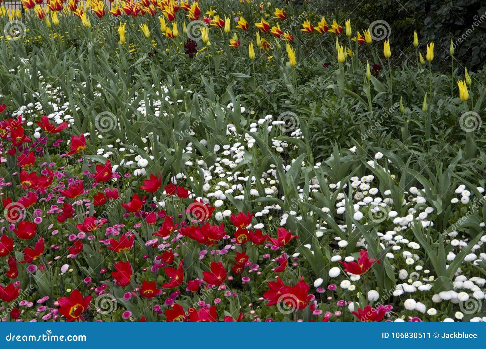 St James Park London Spring Flowers Stock Image Image Of Spring