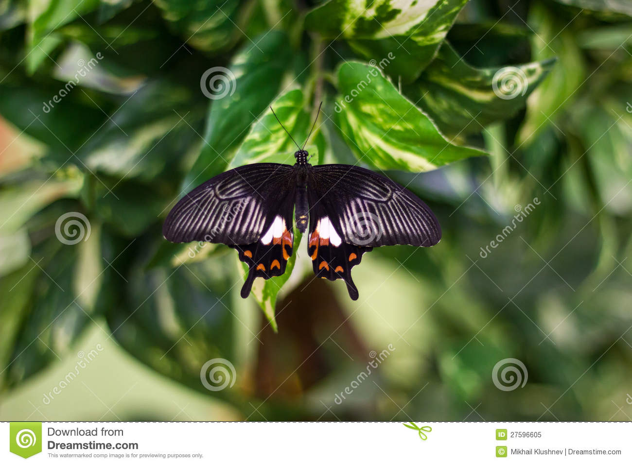 Beauty Butterfly In Nature Royalty Free Stock Photo - Image: 27596605