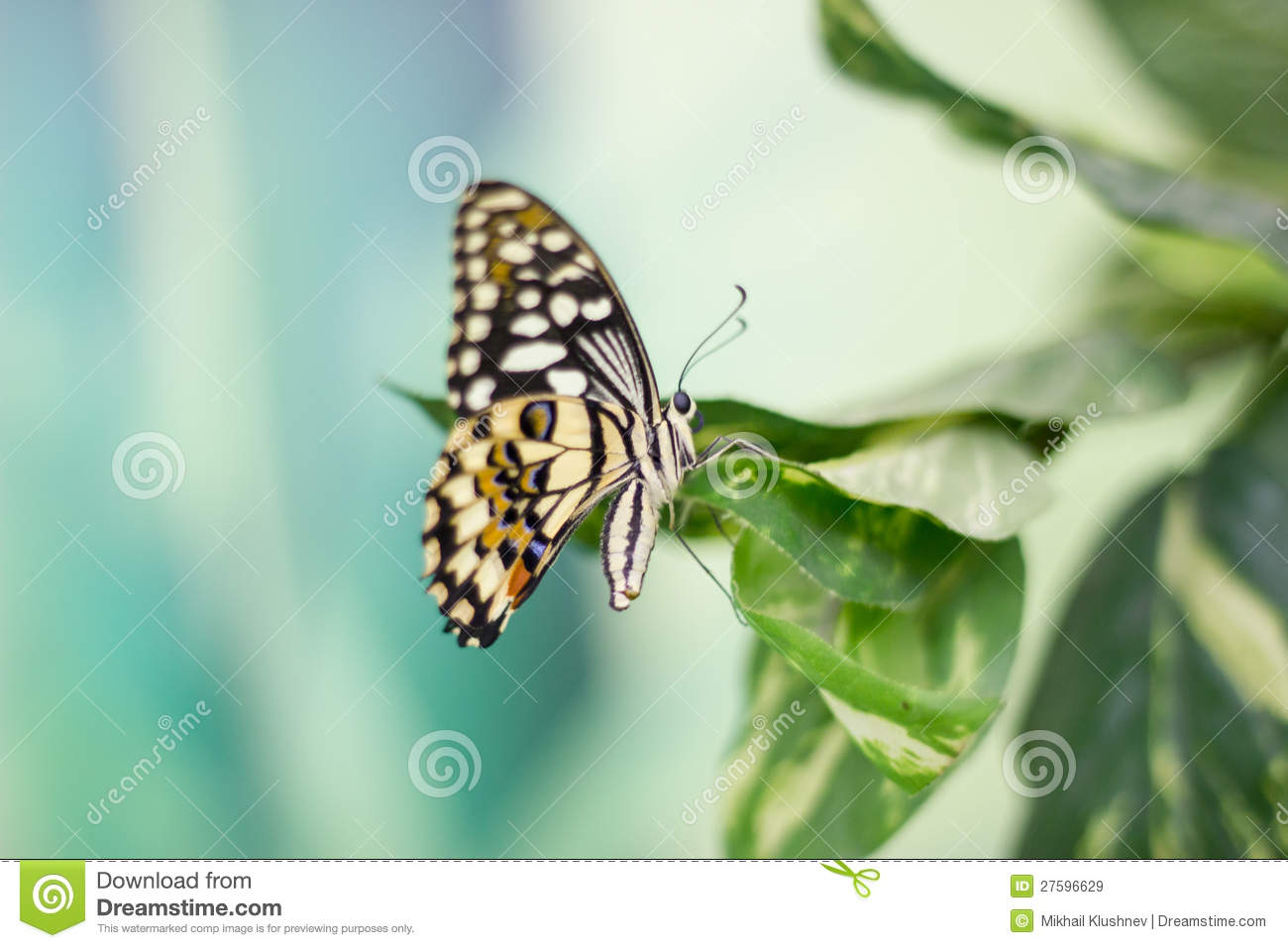 Beauty Butterfly In Nature Royalty Free Stock Images - Image: 27596629