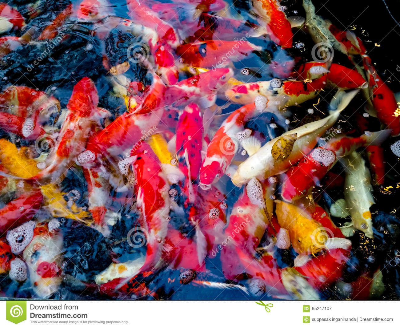 The Beauty And Colorful Of The Crayfish. Stock Image - Image of ...