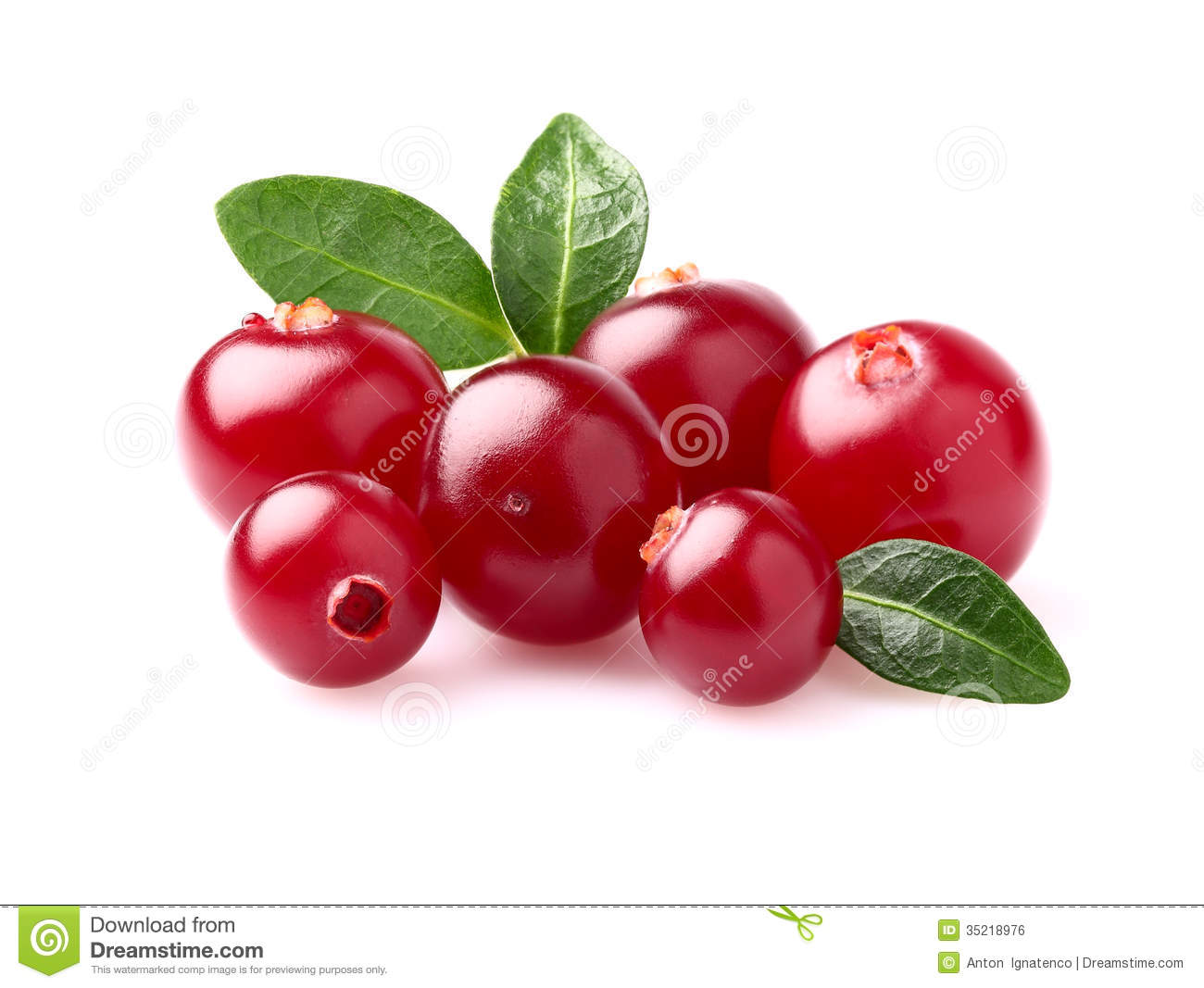Beauty Cranberry In Closeup Stock Photo Image Of Nature