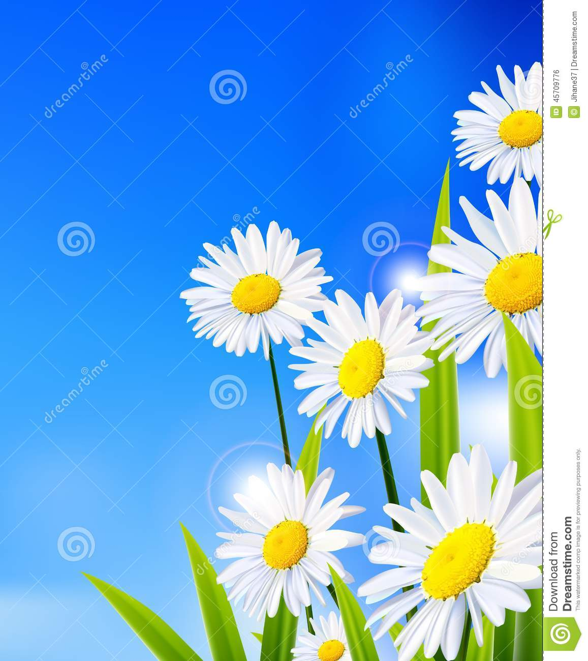 Beauty Daisy Flowers Background For You Design Stock Illustration