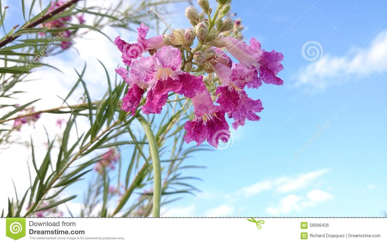 Beauty in the desert stock photo image of over eyes 58996426 royalty free stock photo izmirmasajfo Images