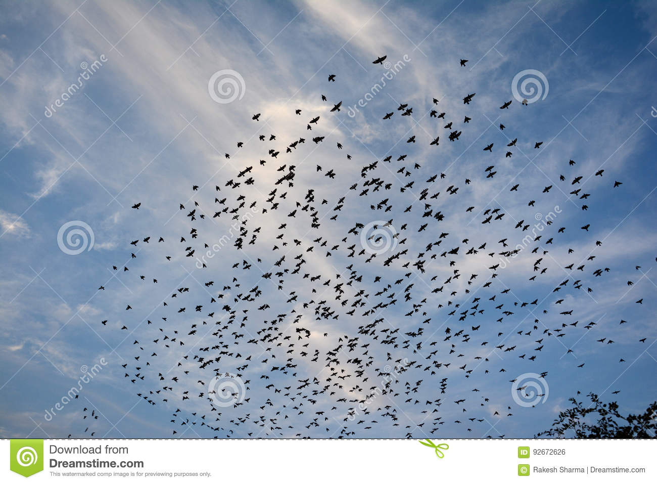 BEAUTY OF EVENING CLOUDS AND FLOCKING BIRDS