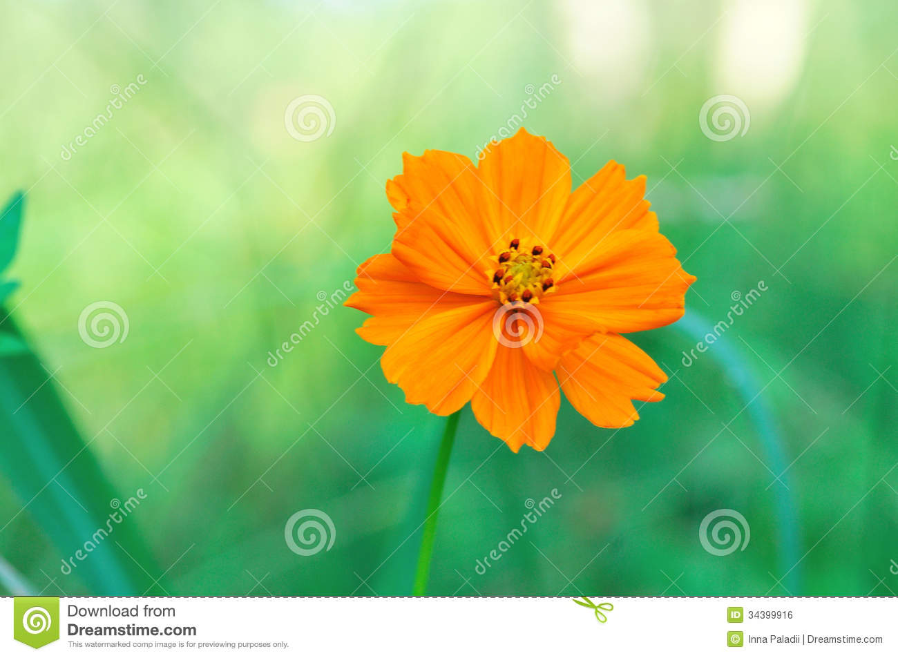 beauty flower royalty free stock image  image, Beautiful flower