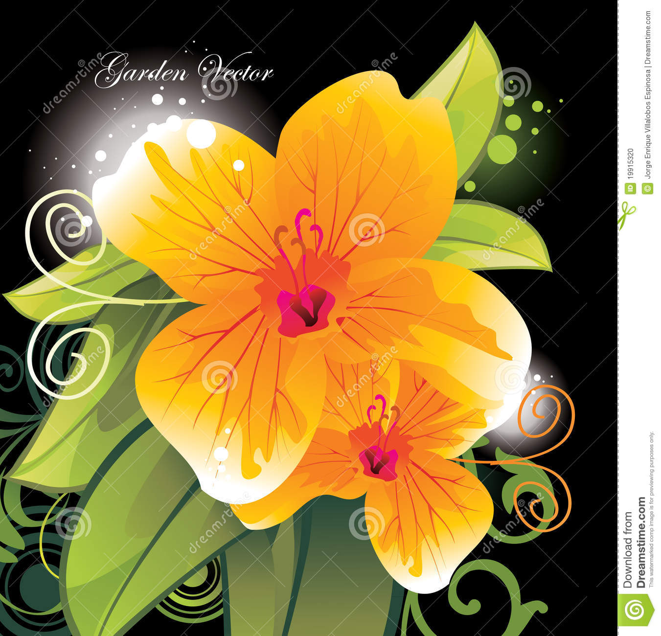 Beauty flower close up stock vector. Illustration of natural - 19915320