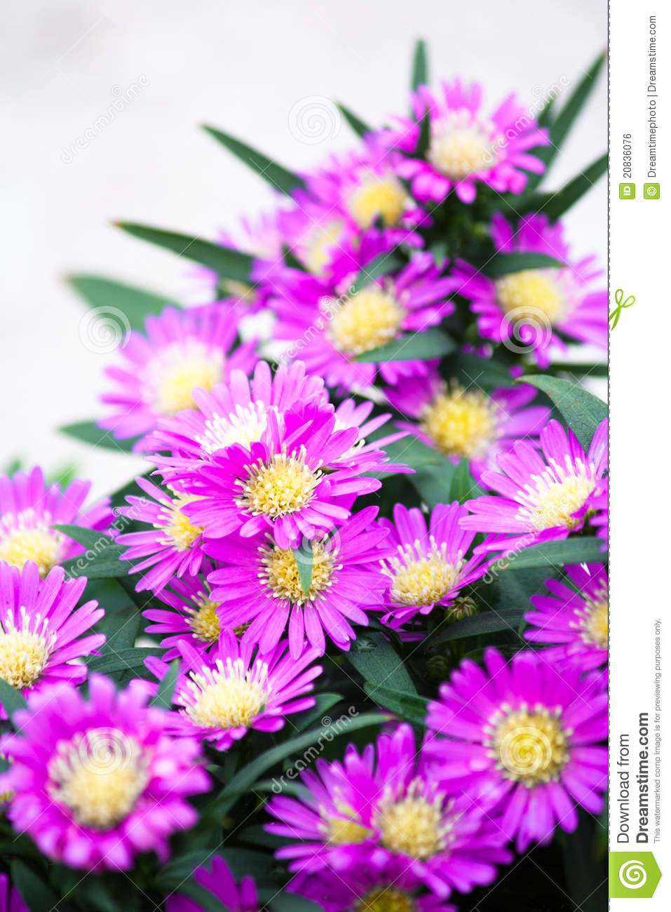 Beauty Of Flowers Stock Photo Image Of Background Field 20836076
