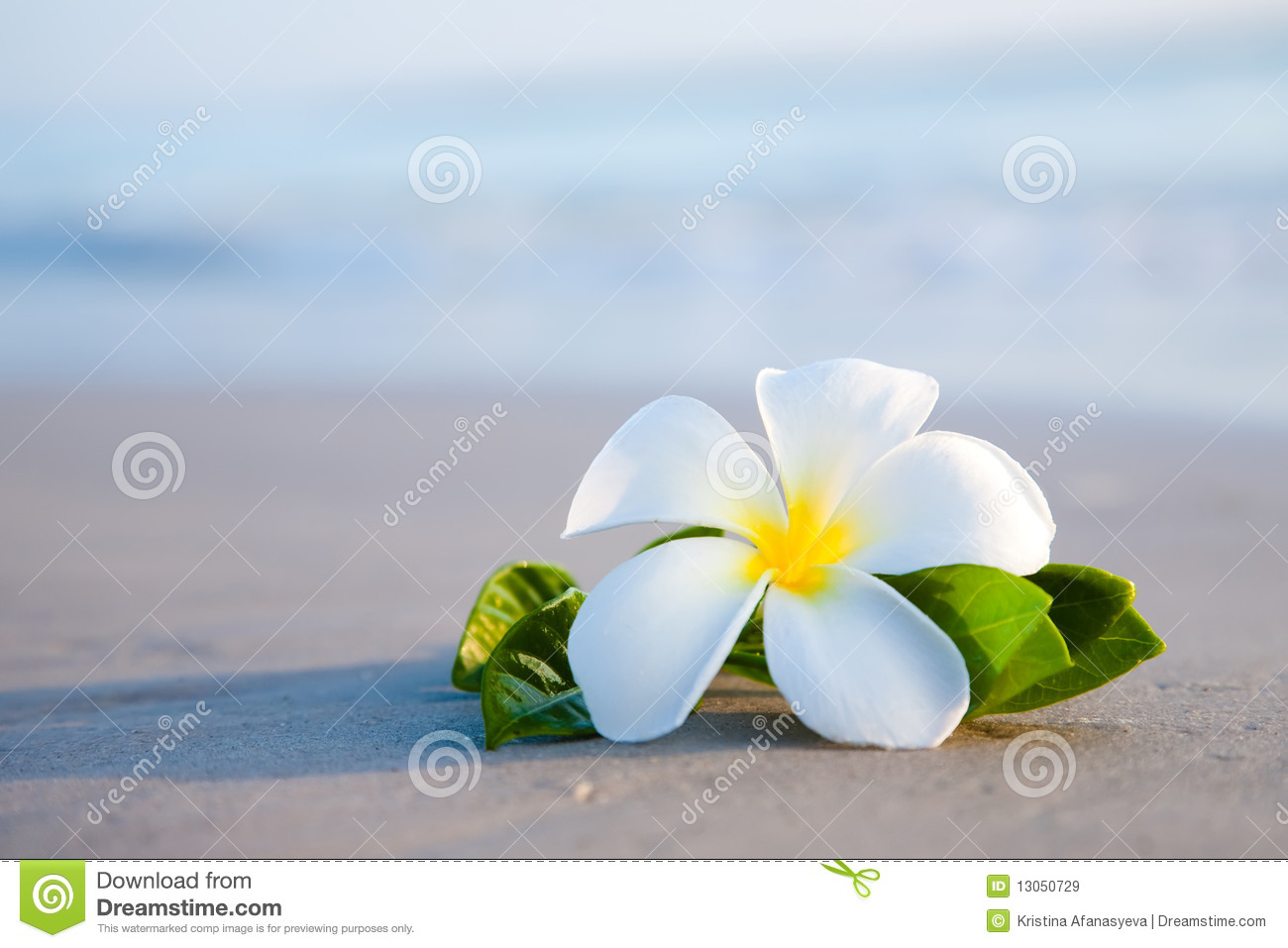 Beauty flowers on the beach stock image image of lying floral beauty flowers on the beach izmirmasajfo