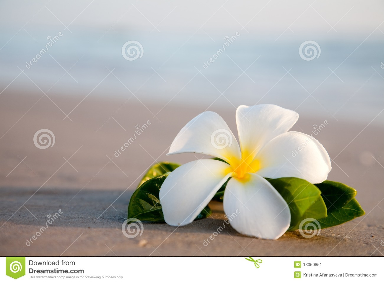 Beauty flowers on the beach stock image image of floral beauty beauty flowers on the beach izmirmasajfo